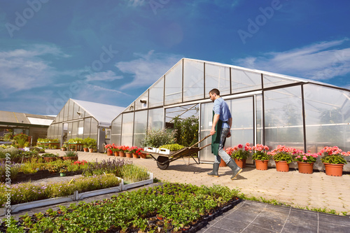 Valokuvatapetti Gardeners working in agriculture - growing and harvesting vegetables in the fiel