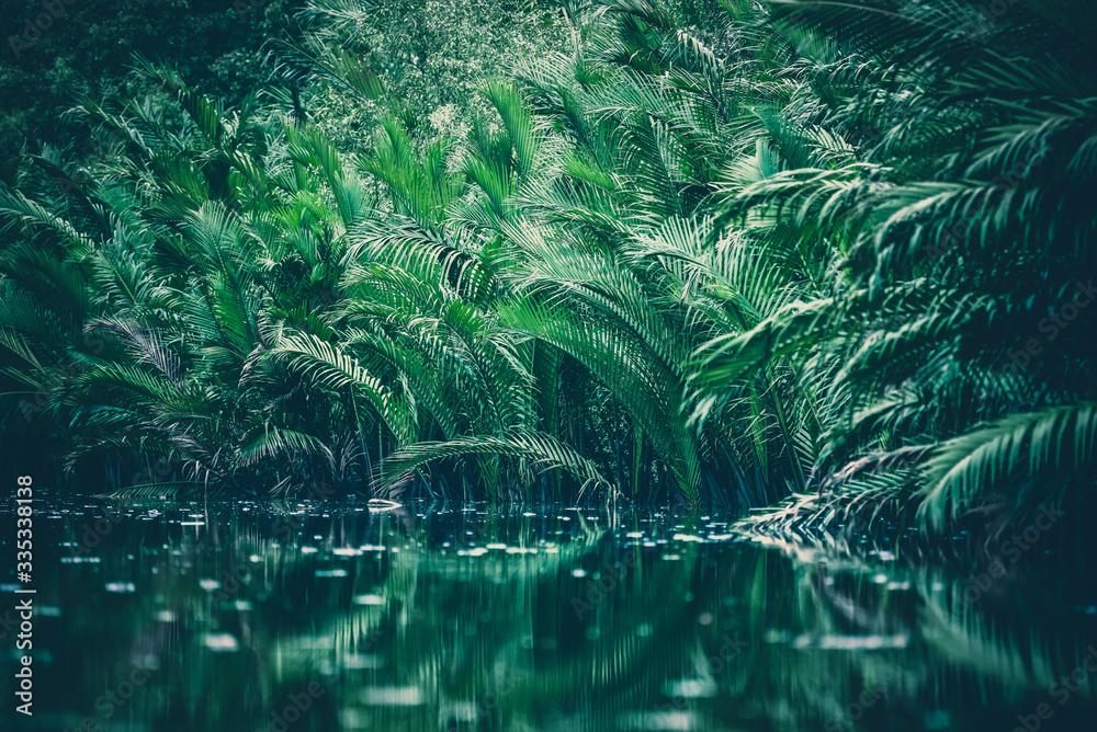 Fototapeta liście egzotyczne nad wodą