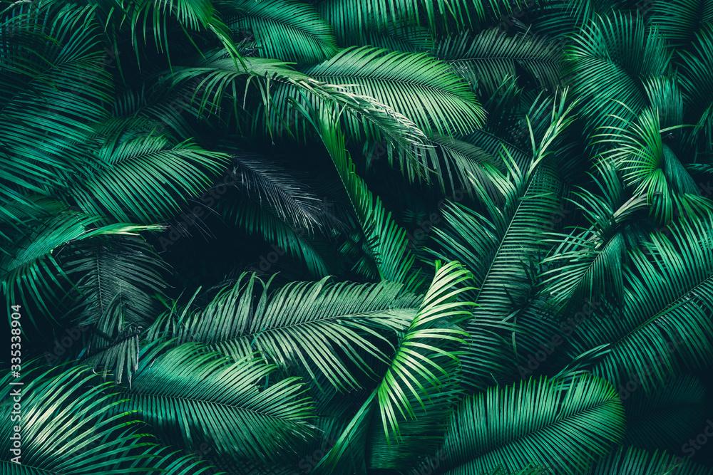 Fototapeta tropikalne liście las dżungla greenery