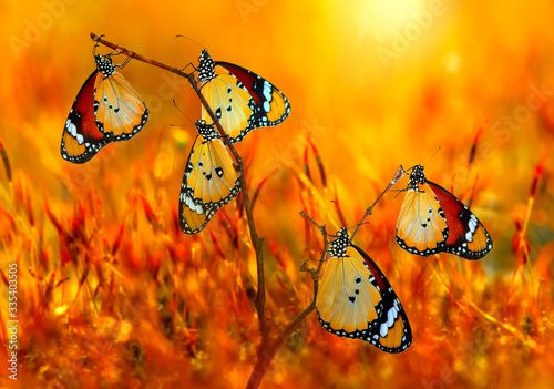 Photo Closeup   beautiful butterflies sitting on the flower.
