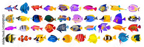 Photo Tropical fish vector cartoon icon