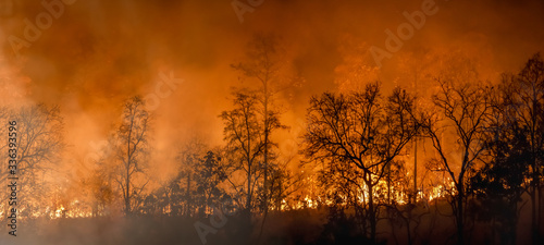 Fotografie, Obraz Rain forest fire disaster is burning caused by humans