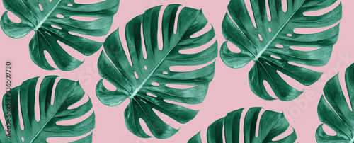 Stampa su Tela Top view of Monstera leaves on pink background, Summer nature fashion concept