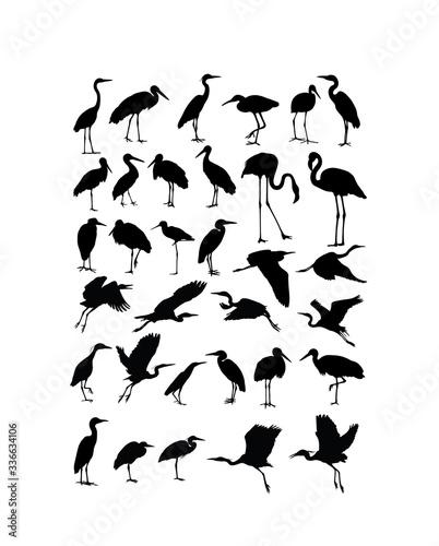 Fotografiet Heron, Egret  and Stork Bird Silhouettes, art vector design