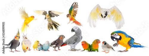 Valokuva group of birds