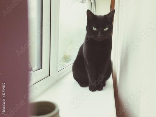 Canvas-taulu Portrait Of Black Cat Sitting On Window Sill