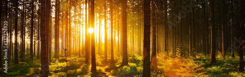 Pine Trees In Forest During Sunset