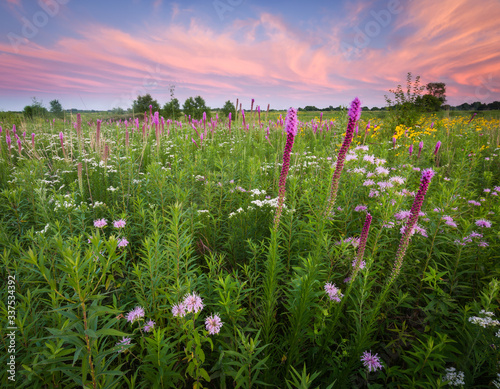 Obraz na plátně A dramatic sunset sky over a a prairie landscape full of blooming native wildflowers