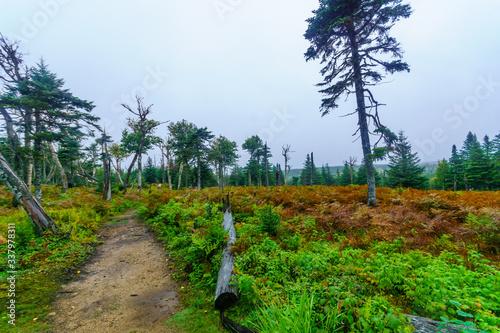 Benjie Lake Trail, in Cape Breton Highlands National Park Fototapet