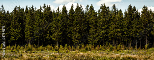 Canvas Print Pine Trees In Forest