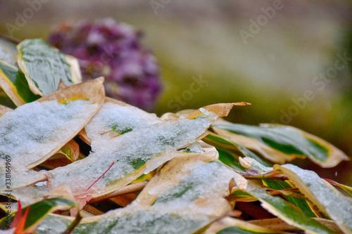 Fotografie, Obraz Close-up Of Raindrops On Dry Leaves