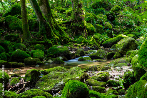 Fotografia Scenic View Of Stream Flowing Through Rocks In Forest