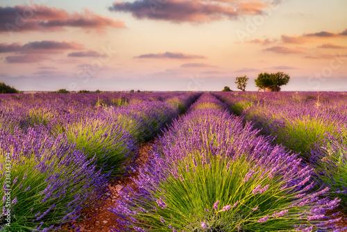 Canvas Print France, Provence Alps Cote d'Azur, Valensole Plateau, Lavender Field at sunrise