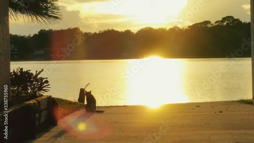 Fotografia Cat Sitting On Lakeshore