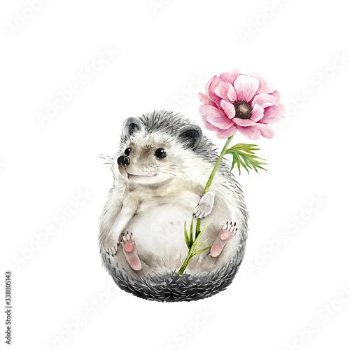 Fototapeta cute hedgehog with anemone flower watercolor illustration, closeup on a white ba
