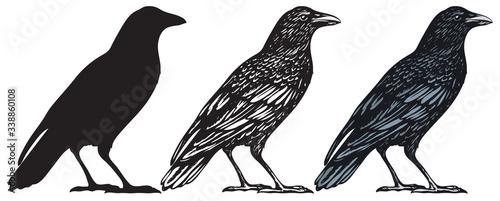 Photo Set of three hand-drawn black birds isolated on white background