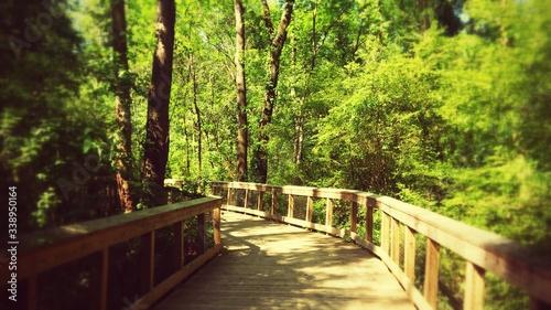 Tablou Canvas Wooden Footbridge Amidst Trees