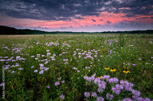 Obraz na płótnie Clearing storm clouds at sunset over a prairie landscape of blooming native wildflowers
