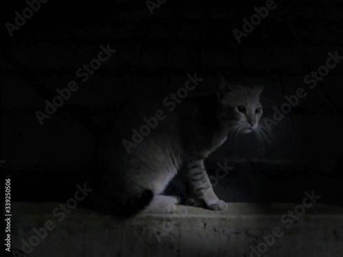 Fotografia Cat Sitting On Retaining Wall At Night