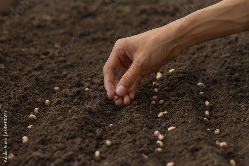 Photo Home gardening expert, Hand drop some seeds of vegetable to health soil