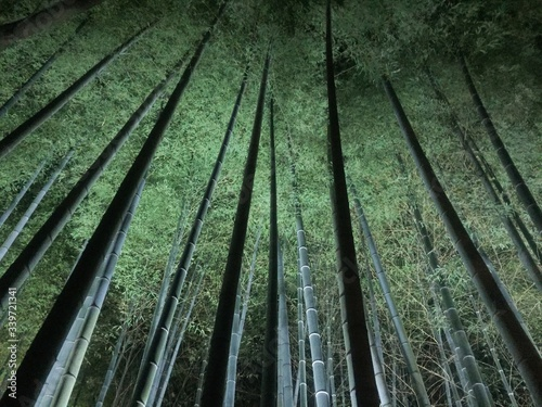 Low Angle View Of Bamboos In Forest Poster Mural XXL