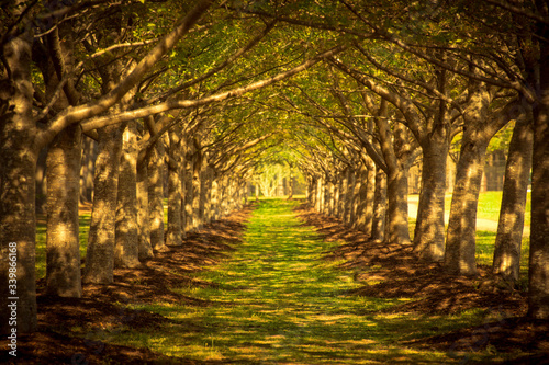 Canvas Print Pathway Along Trees In Forest