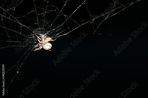 Carta da parati Close-up Of Spider On Web Against Black Background