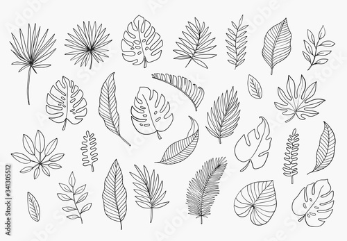 Photo Tropical Leaves in doodle style