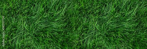 Naturalne zielone tło trawy, widok z góry świeży trawnik