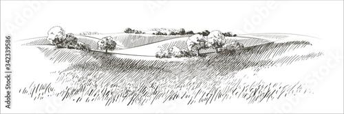 Fotografia Vector sketch Green grass field on small hills