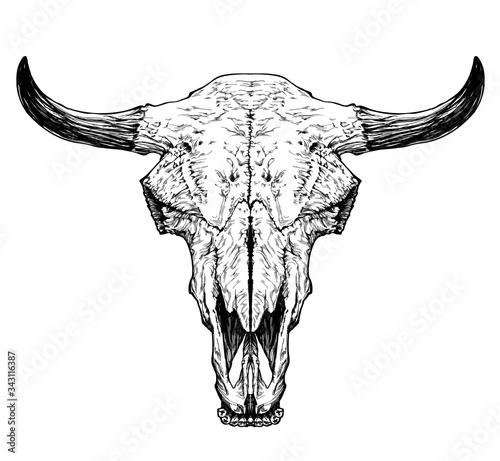 Photo Bull / cow / aurochs skull with horns on white background.