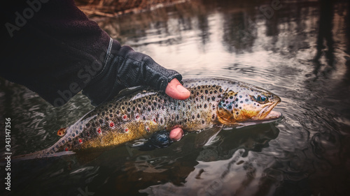 Canvas Print Brook trout in the hand of a fisherman.