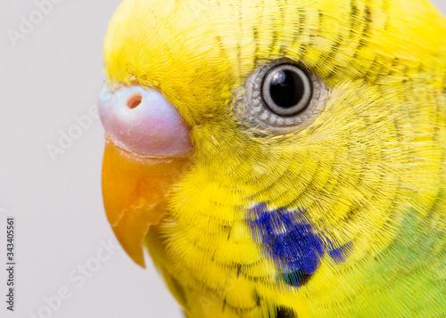 Stampa su Tela Close-up Of Bird Eye