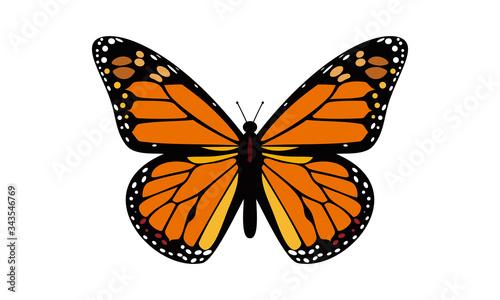 Stampa su Tela B,Butterfly,Beautiful
