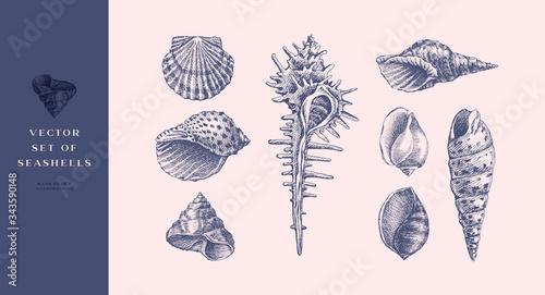 Cuadros en Lienzo Set of hand-drawn realistic seashells