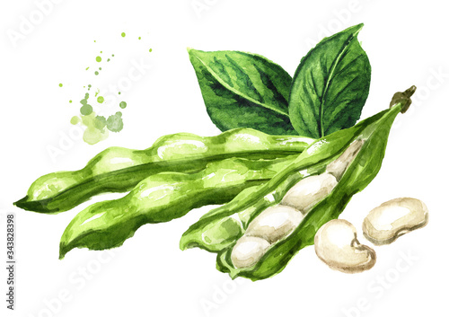 Stampa su Tela Open White kidney beans pod with leaves