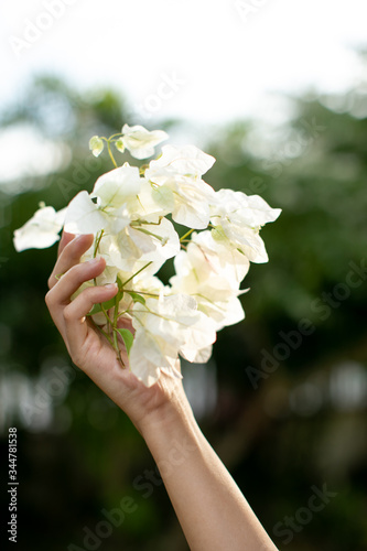 lady hold a bunch of white bougainvillaea Fototapete
