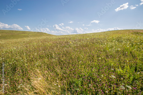 hillside with flowering grass, meadow Fototapet