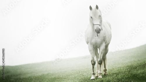 Fotografie, Obraz White horse
