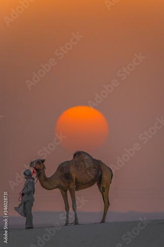 Wallpaper Mural camel in the desert on sun set abu dhabi united arab emirates