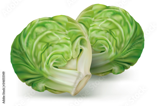Fotografía Brussels cabbage on a white. vector