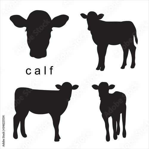 Fotomural Vector black calf illustration of farm animals