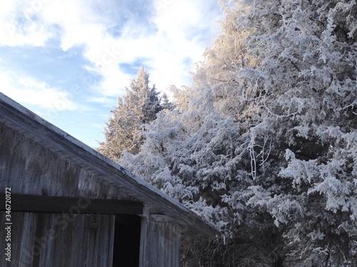 Snowy Tree Over Rood Fototapet