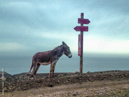 Valokuvatapetti Donkey Standing By Road Sign Against Sea And Sky