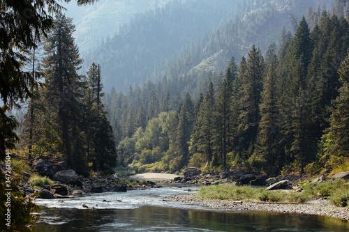 Billede på lærred Scenic View Of River Amidst Trees In Forest