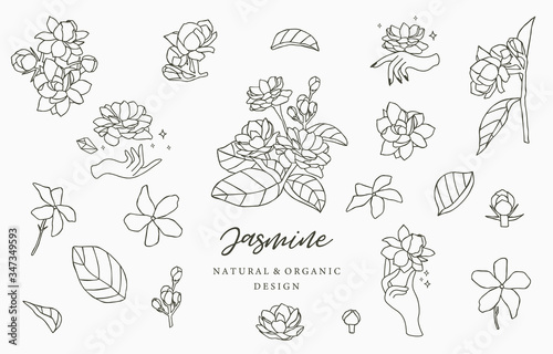 Photo Black Jasmine logo collection with leaves