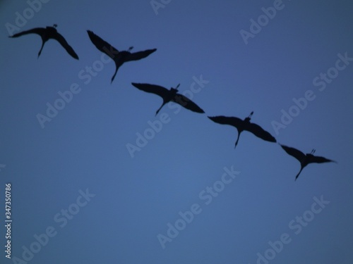 Low Angle View Of Birds Flying Against Blue Sky