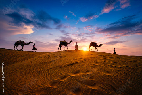 Canvas Print Indian cameleers (camel driver) bedouin with camel silhouettes in sand dunes of Thar desert on sunset
