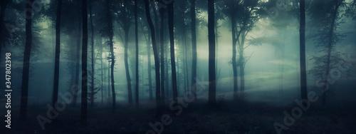 Obraz na płótnie dark mysterious forest panorama, fantasy landscape
