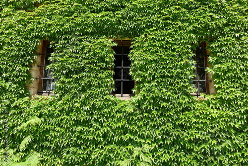 Tela Low Angle View Of Creeper Plants Growing On House